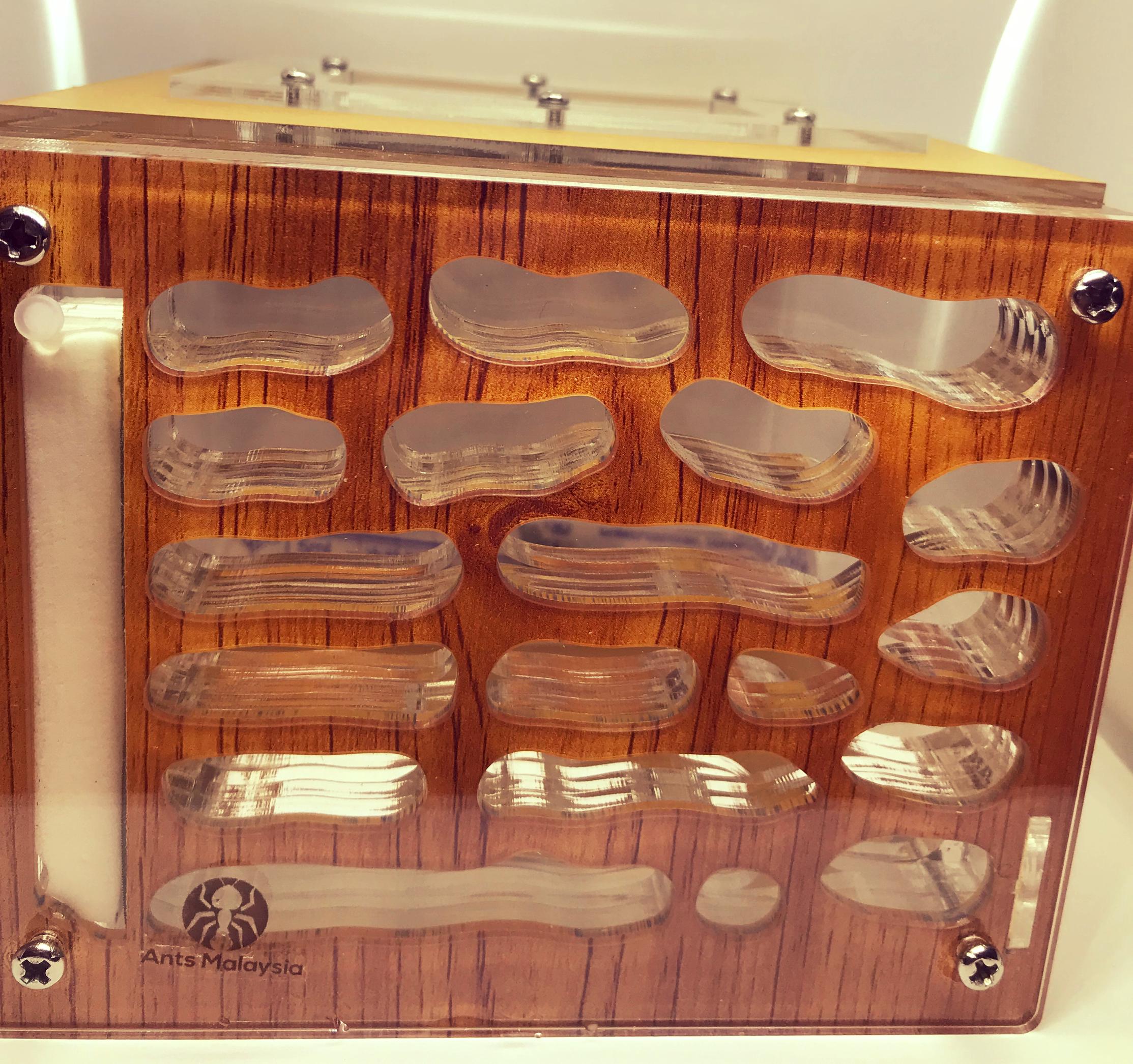 Wooden Feel Medium Formicarium